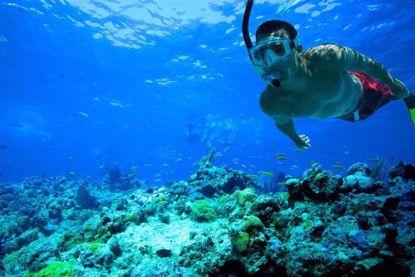 Best snorkeling experiences in Key West
