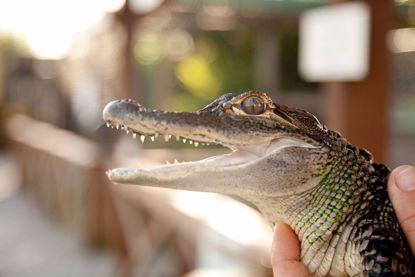 Sawgrass Recreation Everglades Park