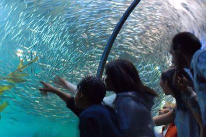 Aquarium of the Bay San Francisco