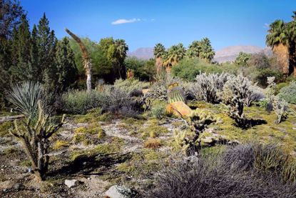 Palm Springs-The Living Desert