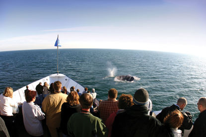 Whale and Dolphin Watching Midweek Adventures